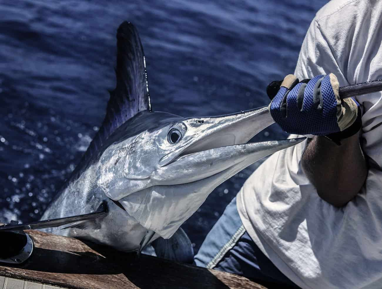 Aruba Fishing Reports